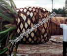 Click Here To View This Palm Tree Item Picture Full Size - Palm Trees In Houston Texas